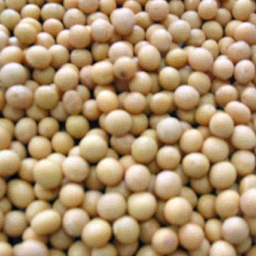 soya_beans